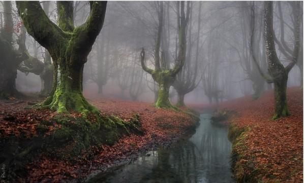 第六名西班牙森林。(圖擷取自BoredPanda)