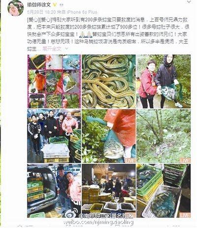 中國一名女子宣稱自己「愛自然愛環保」,在中國某處野放逾900條蛇。(圖擷取自中國網)