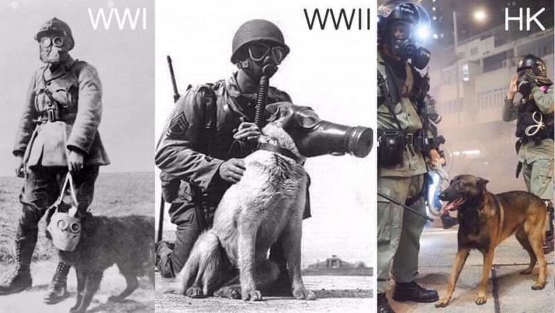 香港愛護動物協會發聲明表示,十分關注警方安排警犬在已發射催淚彈的環境下工作。(圖擷取自TG_反送中文宣谷)