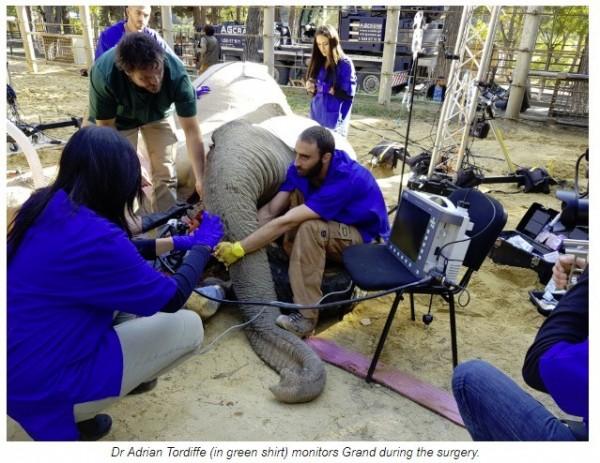 名世界知名的南非獸醫上週在喬治亞為一頭大象移除遭感染的右邊象牙。(圖擷自UP官網)