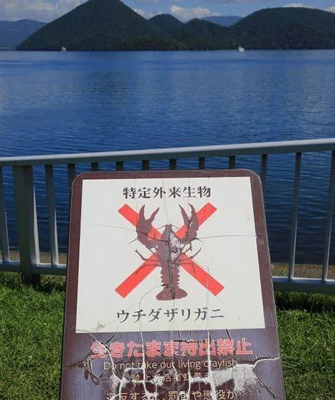 日本人不吃小龍蝦,嚇壞大批中國饕客。(圖擷自3g.163.com)
