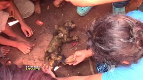 村民聲稱這頭蜜熊是「卓柏卡布拉」,會攻擊家犬、村民,偷吃食物,甚至還不會流血。(圖擷取自鏡報)