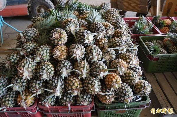 「台灣王品果業公司」總經理林志成指出,今年天氣異常,因鳳梨產生「玻璃肉」的狀況,讓今年的鳳梨外銷不如往年。(資料照)