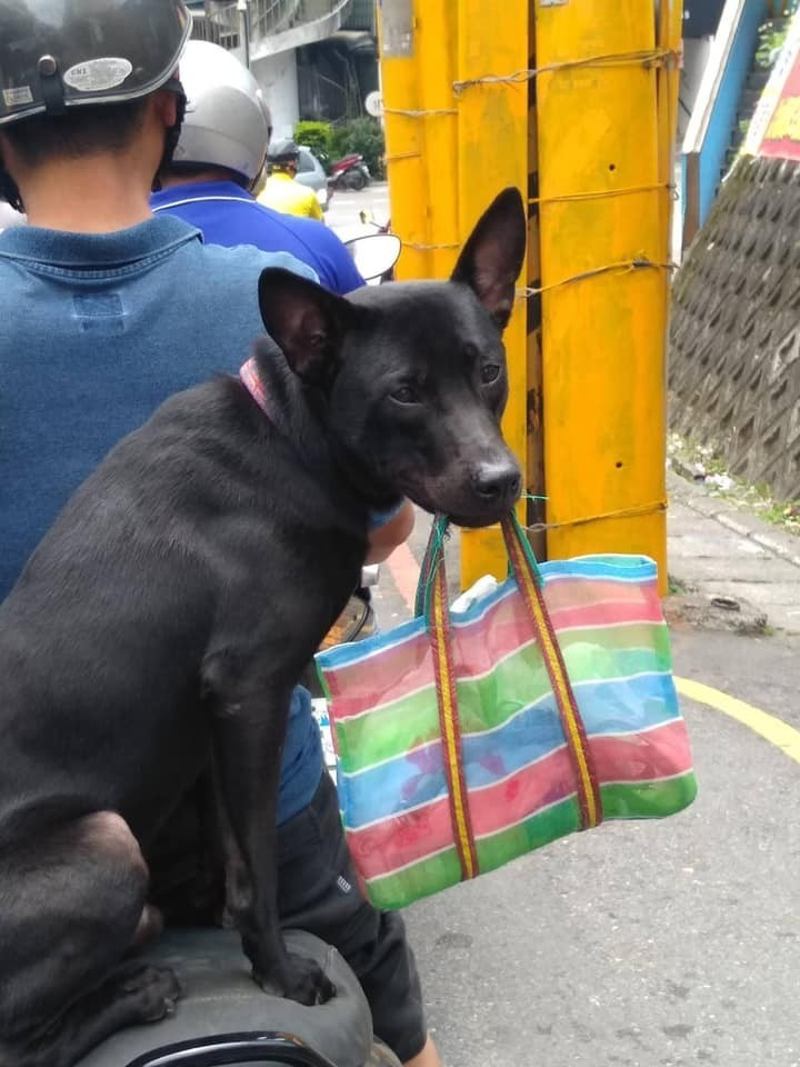 也有網友在留言區分享照片,「我媽看到了同一隻狗狗!超可愛!」畫面中的小黑狗嘴巴不掛珍奶,改叼著一只菜籃,乖巧地側坐在機車後座。(圖擷取自臉書)