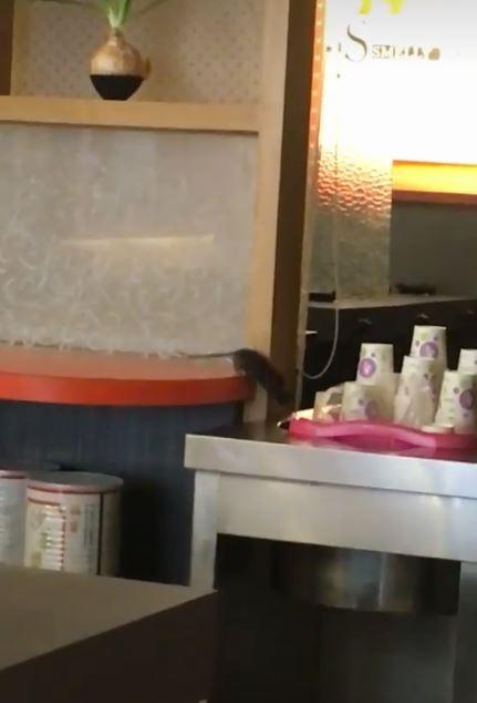 網友在臉書社團「爆料公社」貼出影片,拍下老鼠在醬料台、飲料機旁跑來跑去。(翻攝自「爆料公社」臉書)