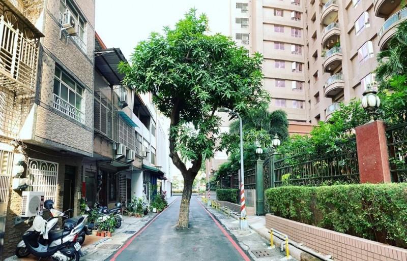 高雄新興區一處巷道,有棵芒果樹成為最狂路霸。(圖取自「高雄點 Kaohsiung.」)