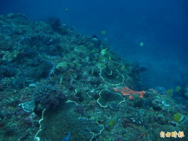 環團擔心大量噴灑泡泡汙水若截流不當流入河道、海洋,可能會毀了珊瑚礁。圖為恆春半島西岸的珊瑚群。(資料照,記者蔡宗憲翻攝)