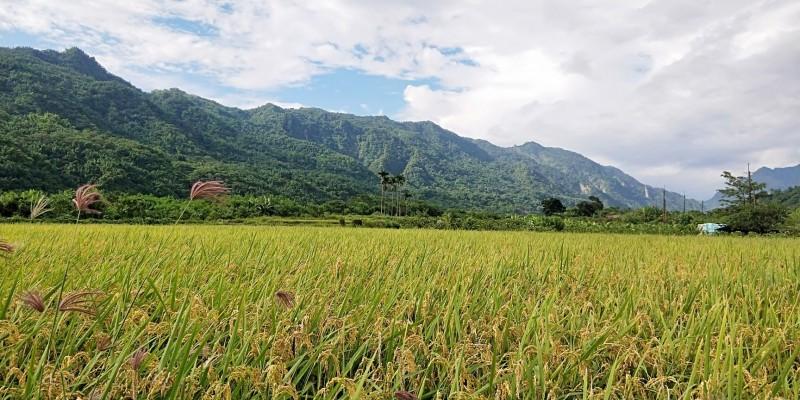 行政院副院長陳其邁在臉書PO出甲仙稻田雨後照,寫道「心之所在,就是故鄉」。(擷取自「陳其邁 Chen Chi-Mai」臉書)