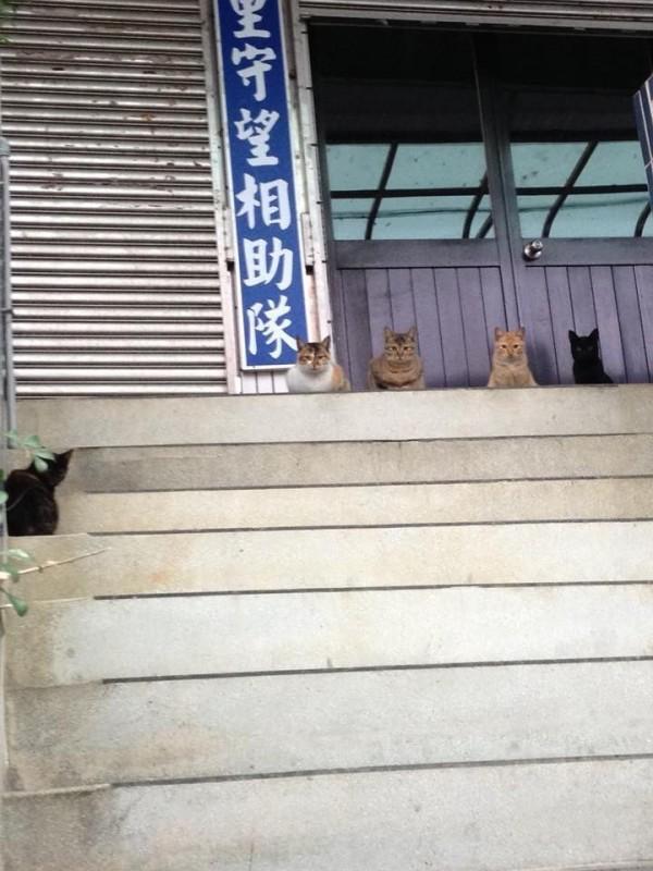 4隻貓蹲在鄰里辦公室門口,網友認為恰似守望相助隊。(圖擷取自臉書社團「貓咪也瘋狂俱樂部 CrazyCat club」)