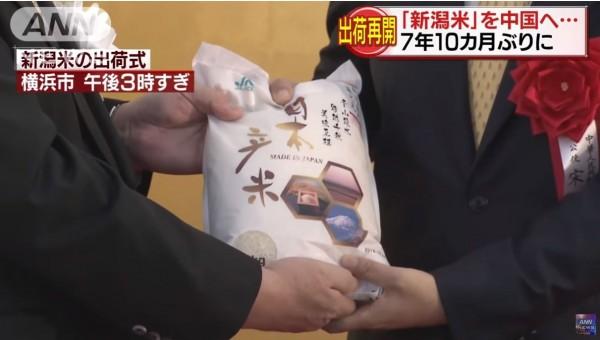 解禁後的第一批新瀉越光米已運往中國,鎖定高收入階級。(圖擷自YouTube)