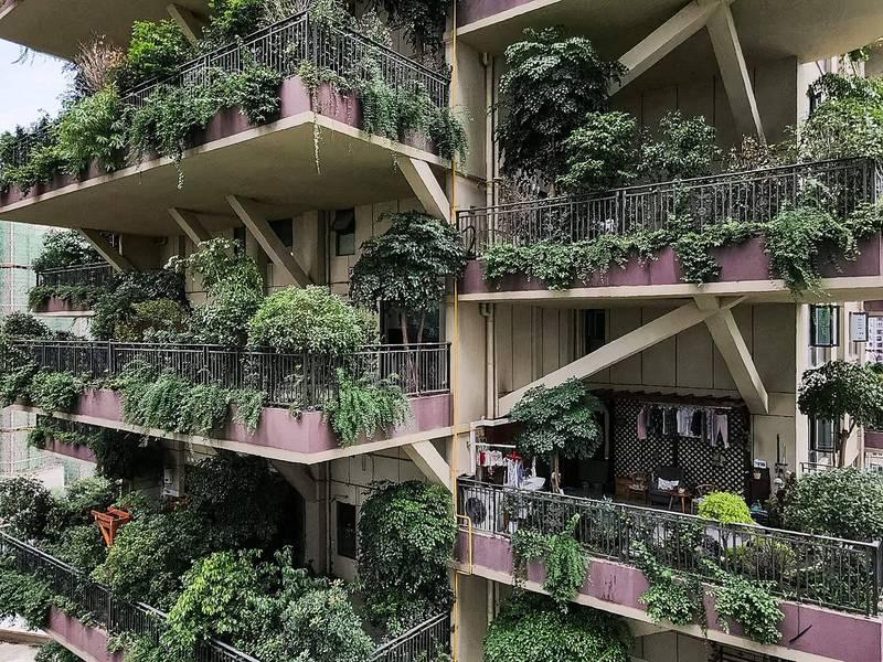 房地產網站指出,「七一城市森林花園」的826戶已完售,但實際遷入戶數僅有10多戶;一位入住數個月的屋主表示,社區外觀和花園設計確實不錯,但是大量植物引來大量蚊蟲,也有點擔心灌溉問題和陽台的承重。(法新社)