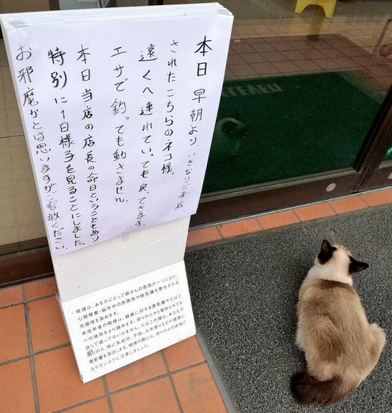 日本1家餐廳日前在推特表示,1隻黑白相間的貓咪在店長忌日當天賴在門口不走。(圖翻攝自ringroad1推特)
