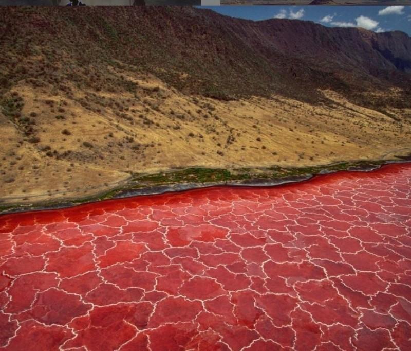 納特龍湖淺水區湖水往往是酒紅色或咖啡色。(圖擷取自IG commeuneillusion)