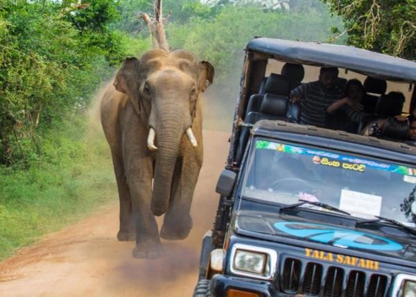 所幸在大象掙脫後,司機立刻加速駛離現場,大象在後方追了幾步後就放棄,人象都沒有受到傷害。(圖擷自twitter)
