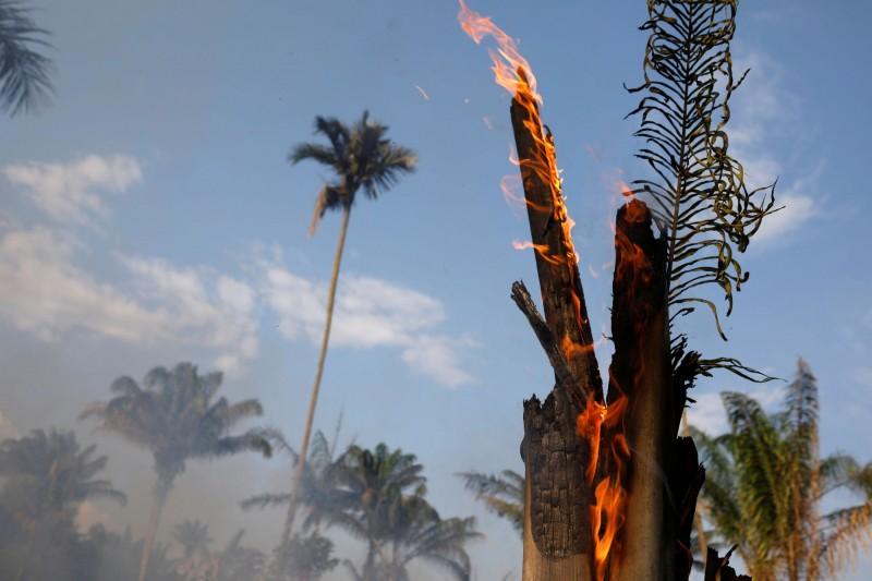 巴西亞馬遜雨林今年的野火數量已破過去2013年以來的紀錄,主因和人們濫砍濫伐、焚燒森林的行為增加有關。(路透)