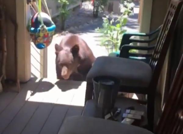 加拿大一隻熊擅自闖進一位阿嬤家中。(圖擷自推特)