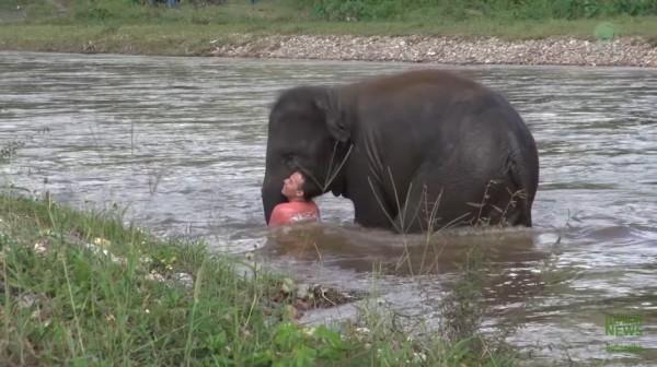 小象以身體擋住假裝溺水的工作人員,避免他被河水沖走。(圖擷自YouTube)