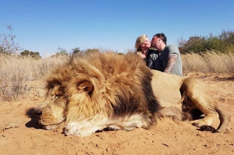 加拿大一對夫婦參加南非的「獎杯狩獵」,獵殺一頭獅子,並在遺體旁擁吻自拍,引發爭議。(圖擷取自Colleen Cradock-Williams@Twitter)