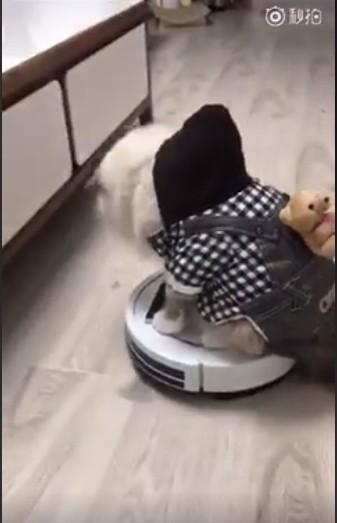 寵物貓站上掃地機上玩耍,下一秒寵物貓悲劇倒地。(圖擷取自秒拍影片)