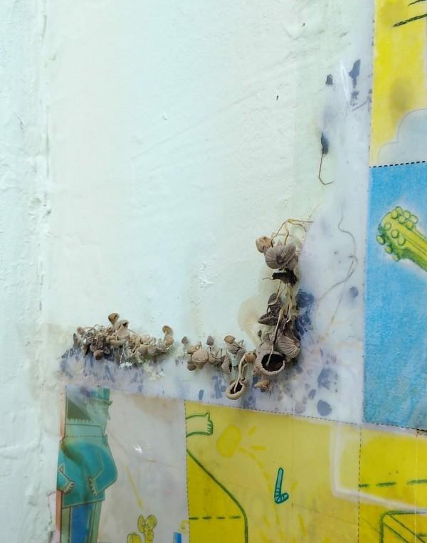 原PO工作室的壁癌相當嚴重,甚至香菇都長出來了。(圖擷取自臉書社團「爆怨公社」)