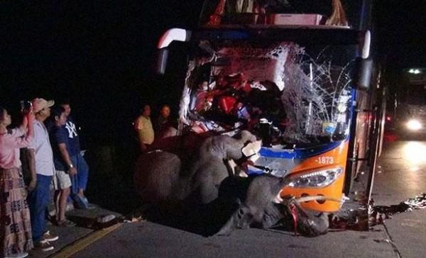 泰國一輛國營巴士行經公路爬坡路段時,由於夜晚視線不佳,駕駛來不及反應直接迎面撞上從庇護中心逃跑出來的一頭8歲公象,導致大象因猛烈撞擊當場慘死,45歲駕駛則身受重傷。(圖擷自曼谷郵報)