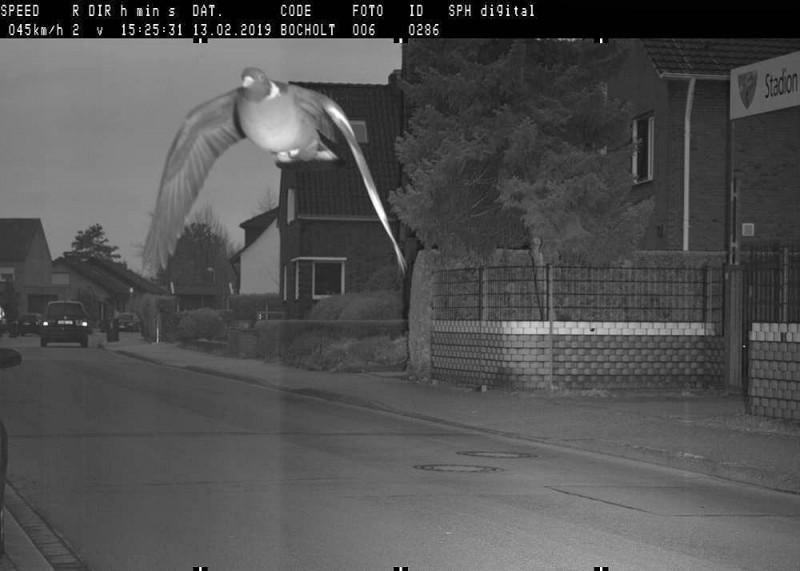 博霍爾特1隻鴿子超規定速限50%被測速照相機捕捉到,德國警方依法開罰。(圖擷自博霍爾特臉書)
