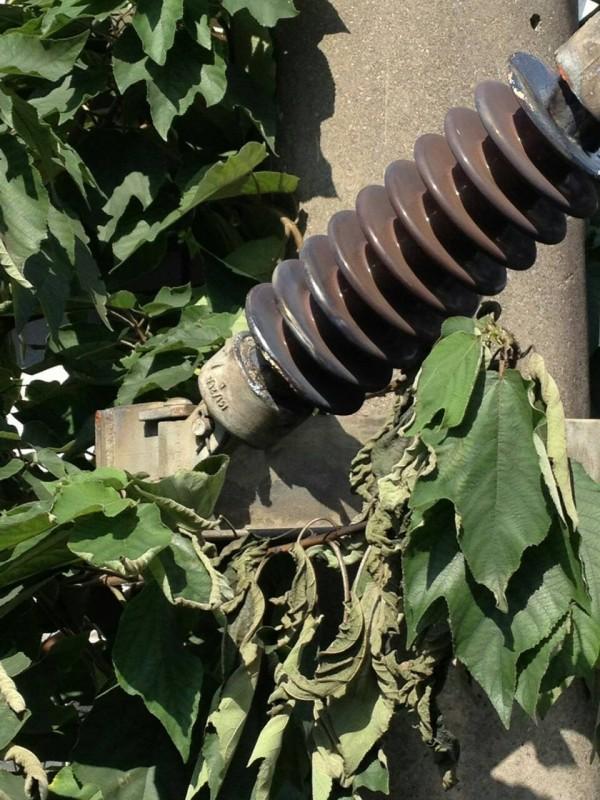 台鐵指出,此次事故發生原因,初步判斷是因樹林站往樹林調車場間,有民宅樹倒,造成主吊線斷落150公尺、三角架3組傾斜、礙子受損等,導致影響電車線故障。(台鐵提供)