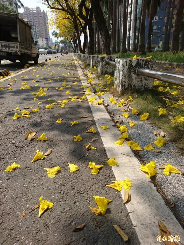 人行道花謝花落鋪滿地,也是美不勝收。(記者洪瑞琴攝)