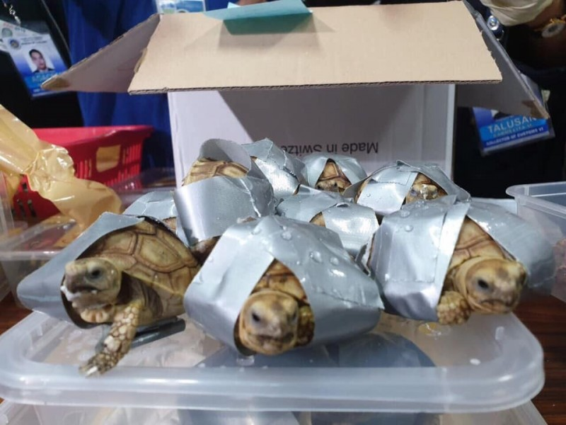 菲律賓警方昨(3)日查獲瀕危龜類走私案,超過1500隻龜類被膠帶封住4足後,放置於4個行李箱內棄置於馬尼拉機場,身價至少8萬6千元美金(折合台幣約265萬元)。(圖取自菲律賓海關官方FB專頁Bureau of Customs NAIA)