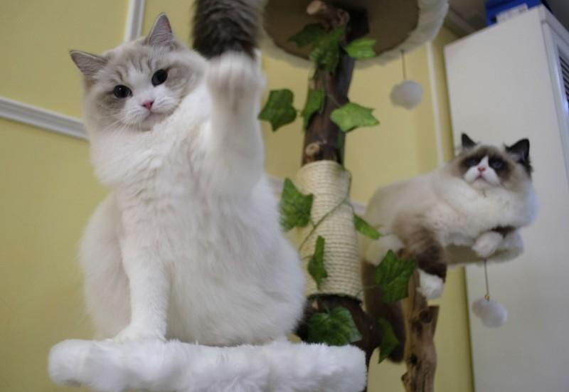 美國野生動物專家帕克(Jeannette Parker)餵流浪貓時被咬傷,就醫打針後收到4萬8512美元(約新台幣150萬元)的帳單。貓咪示意圖。(法新社)