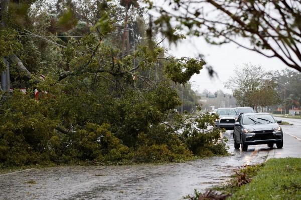 馬修重創美國東南沿岸,造成不少災情。圖為路樹倒塌,影響交通。(法新社)