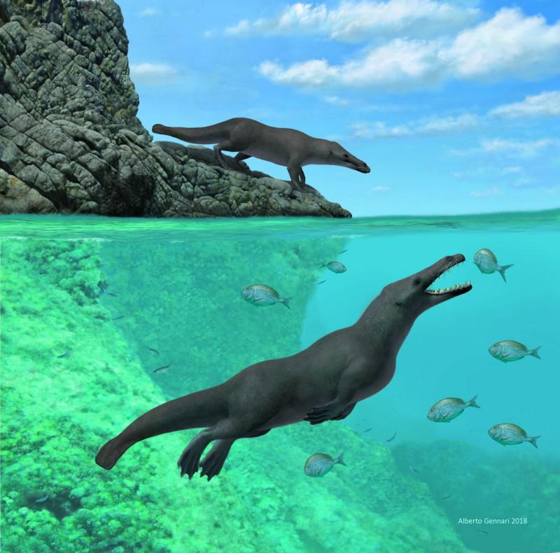 秘魯出土了一具4300萬年前的「四足鯨」化石,這隻鯨魚祖先除了擁有四條腿之外,腳掌還同時有蹼和蹄。(路透)