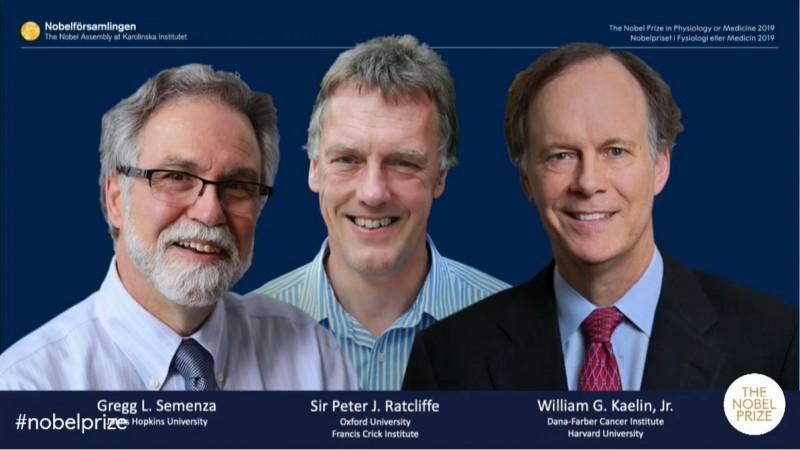 2019諾貝爾生醫獎由美國癌症學家凱林(William G. Kaelin Jr)、英國醫學家拉特克利夫(Peter J. Ratcliffe)和美國醫學家塞門扎(Gregg L. Semenza)共同摘下殊榮。(圖擷取自諾貝爾獎影片)