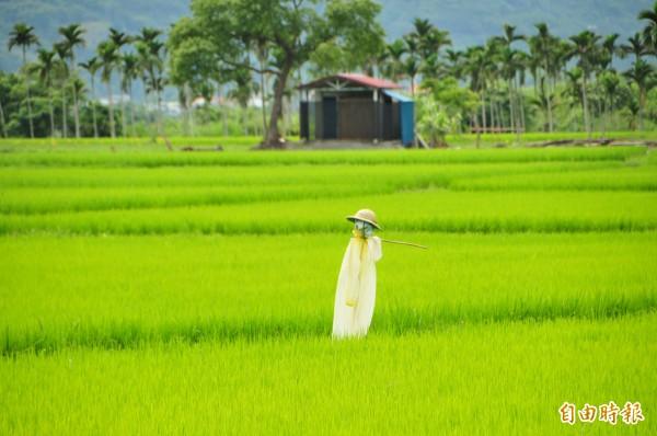 一期稻作抽穗期將近,各地水利會也開始動員找水儲水,以因應農民耕作需求。(記者花孟璟攝)