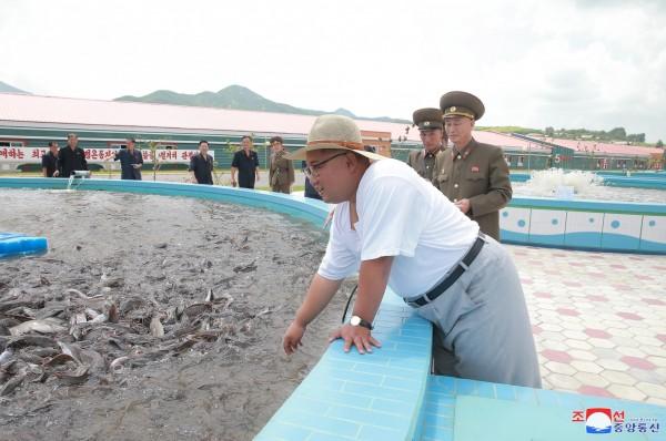金正恩視察漁業加工廠。(歐新社)