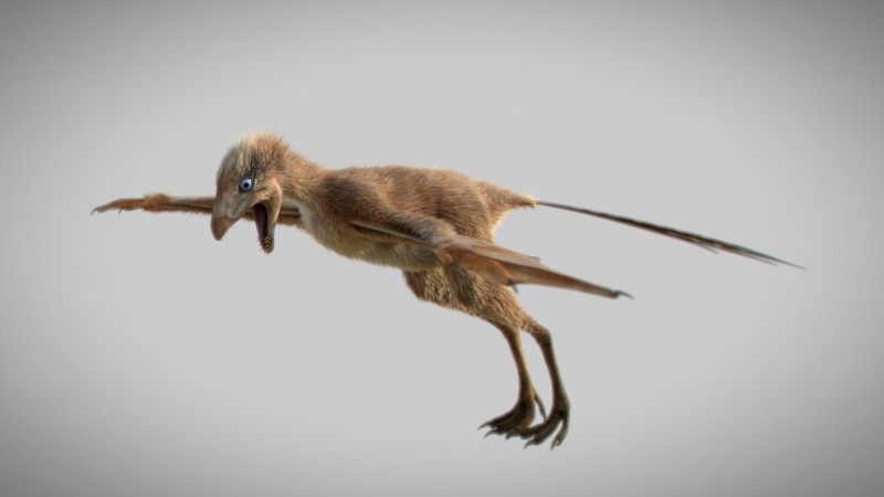 Ambopteryx longibrachium滑翔模擬圖。(路透)