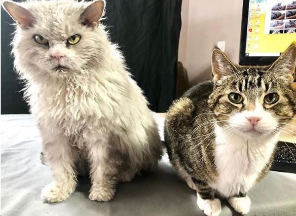 就算身邊有別隻貓咪,Albert仍不改臭臉本性。(圖擷自IG)