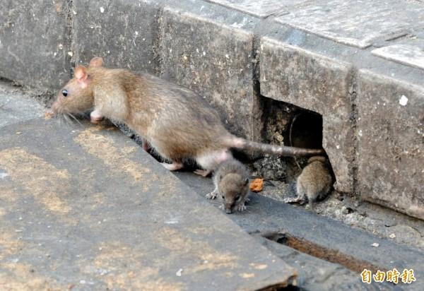 周男找工人到家裡加裝冷氣,工人事後卻向大廈管理員告密他養老鼠,讓牠們隨地大小便;周男未依管委會要求進行改善,被提訟要求搬離。(示意圖)
