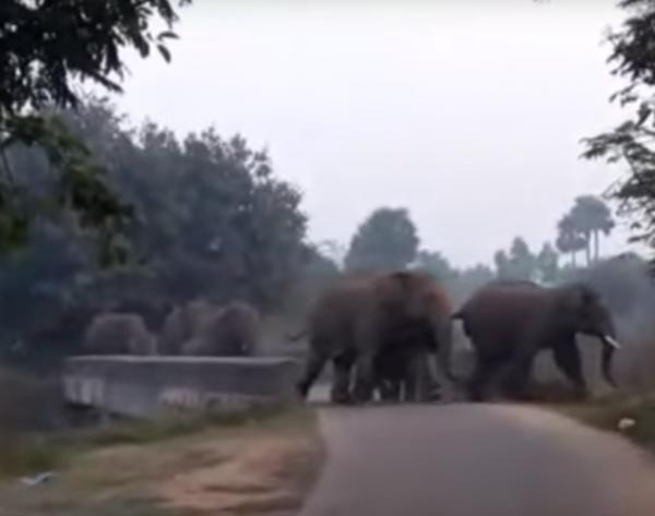 近來印度野象踩死人的事件頻傳。(圖擷自YouTube)