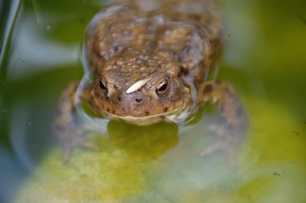 為了保護蟾蜍繁殖,法國聖馬羅市市府決定,將維德海岬旁的一條道路,整整封鎖2個月。(圖取自聖馬羅市官網www.ville-saint-malo.fr)