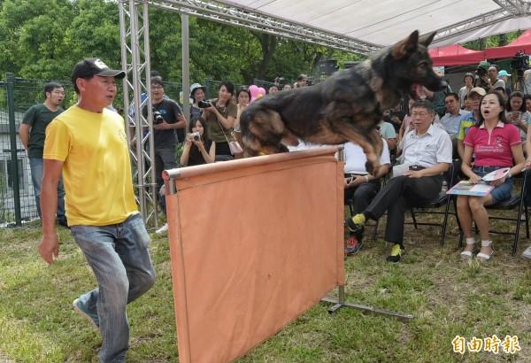 台北市長柯文哲24日出席潭美毛寶貝快樂公園啟用野餐日記者會,欣賞訓練有素的工作犬表演。(記者張嘉明攝)
