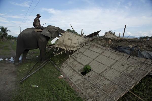 印度當局把大象當成「挖土機」,拆除位於卡濟蘭加國家公園附近的3村落。(美聯社)