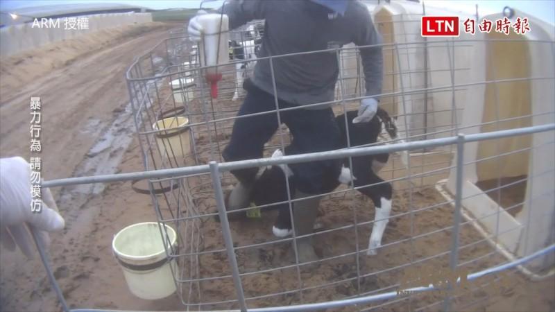 臥底揭發真相 美國酪農場驚爆動物遭暴力虐待