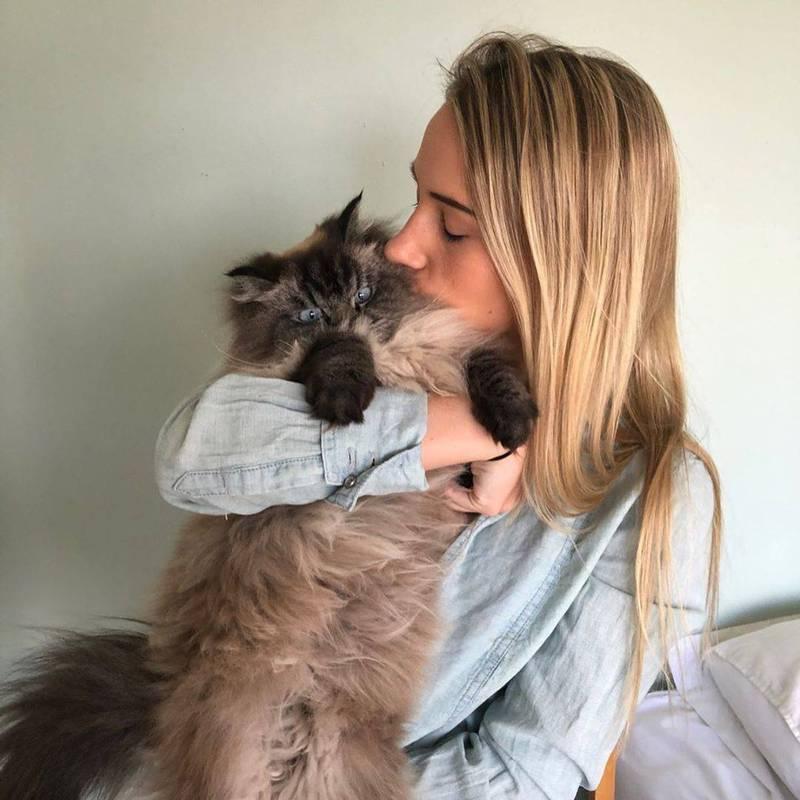 其實牠很愛討抱抱。(Instagram merlinragdoll 授權)