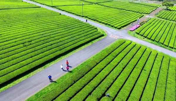 南韓濟州島是觀光勝地,雖然中客不來,但從4月29日到5月9日的黃金長假期間,總旅客數只比去年同期少了0.7%。圖為遊客徜徉在濟州島的美景之中。(歐新社)