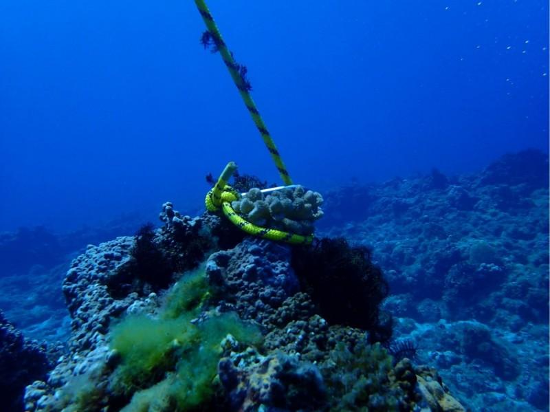 照片曝光讓許多潛水人士氣炸。(擷自臉書粉專靠北潛水)