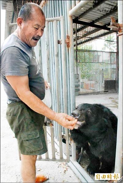 有「台灣黑熊之父」的李藤正合法飼養台灣黑熊多年,8月22日因病過世,遺留下來的3隻黑熊該何去何從,成了一大問題。(資料照)