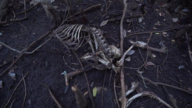 島內隨處可見各種動物的骸骨,令人看得毛骨悚然。(圖擷取自MattSonswa YouTube)