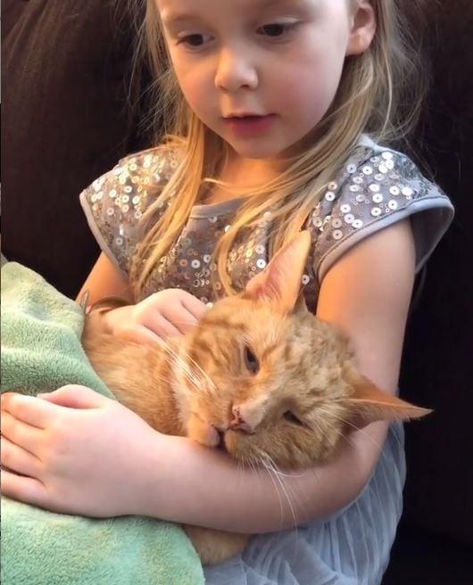 老貝里於臨終前窩在艾比的懷抱裡,由艾比唱著童謠,邊撫摸愛貓。貝里撐著半閉的眼睛,3個小時後,貝里就在艾比的懷裡離世。(圖擷取自IG)