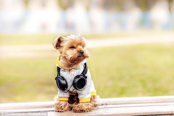 很多主人基於可愛、保護等理由,喜歡給狗穿上衣服。(圖擷自DailyMail)